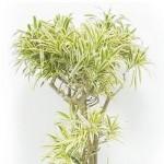 リラクゼーション効果が科学的に実証されている室内観葉植物のススメ